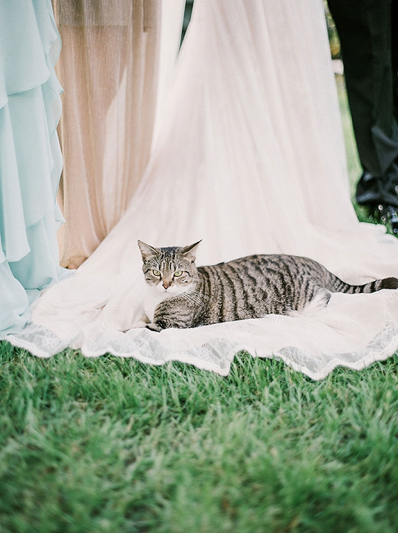 Kitty photobomb on wedding day dress for adorable photo idea