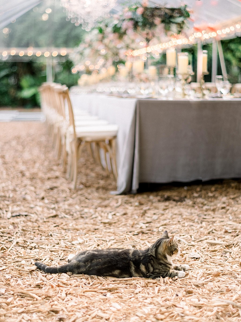 Cute wedding venue cat at Ernest Hemingway Home in Key West Florida