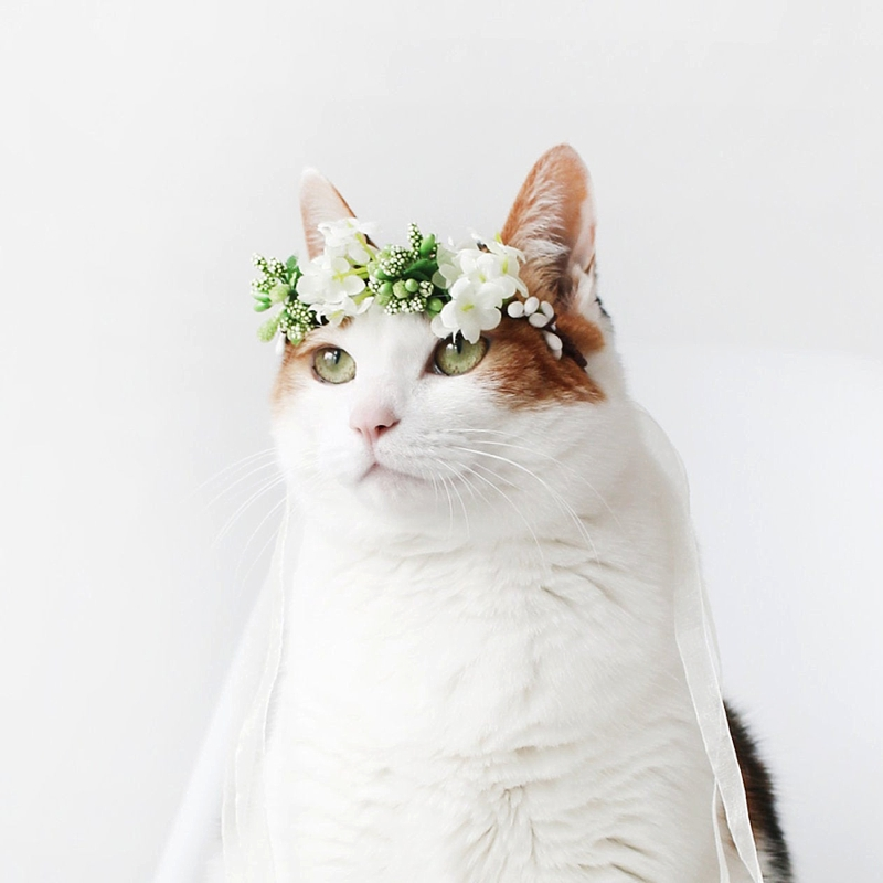 Adorable silk flower crown for a wedding cat