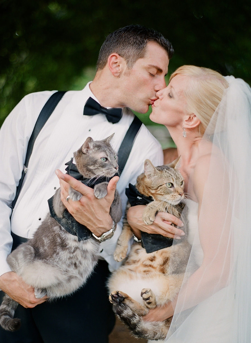 Adorable cats wearing kitty sized tuxedoes for their humans wedding