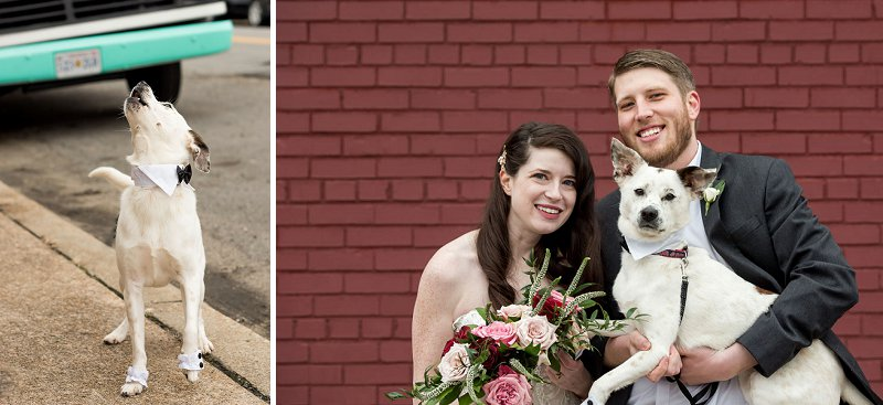 Cute wedding dog with little wedding cuffs and black bow tie for modern wedding