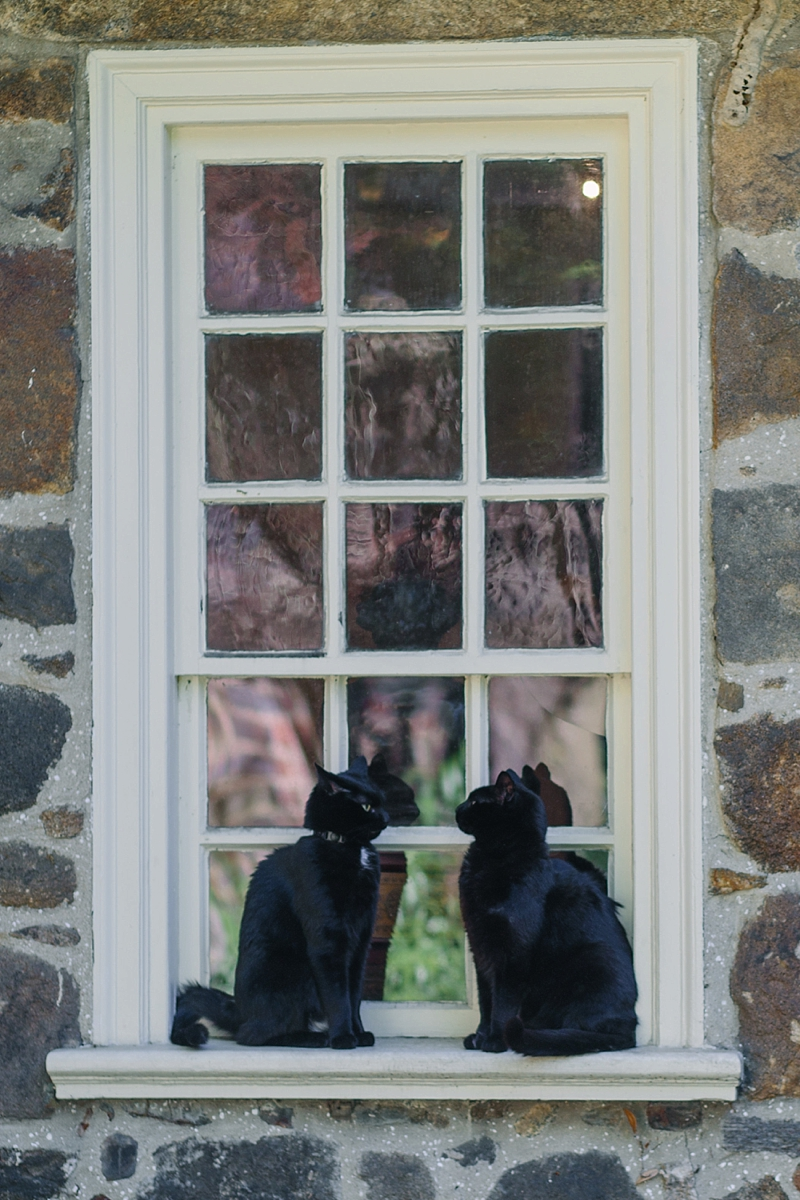 Edgar and Pluto at the Edgar Allen Poe Museum in Richmond Virginia oversees a spring wedding ceremony